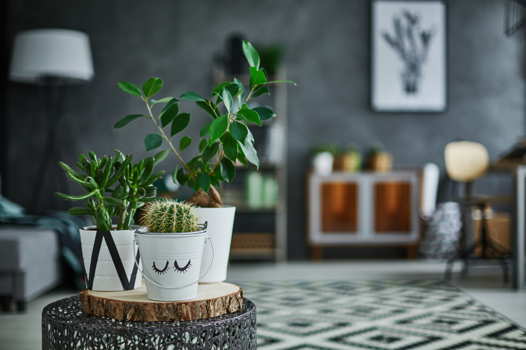 kamerplanten in je interieur